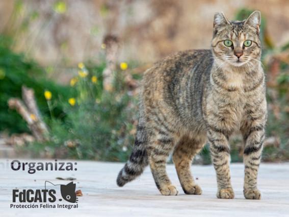 III-jornadas-felinas-andaluzas-malaga-mi-miga
