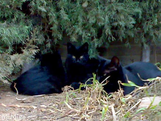 Colonias de gatos & Salud Pública
