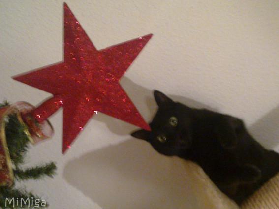 Feliz Fin de Año (con gato)