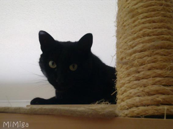 gato-negro-rascador-sisal