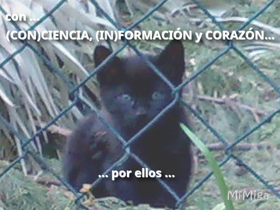proteccion-animal-gatos-con-ciencia-in-formacion-corazon