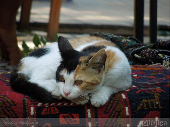 gato callejero estambul turquia