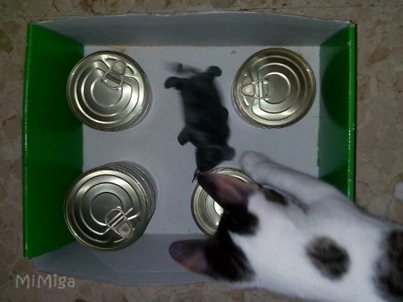 Lo que debes saber sobre comida de gato