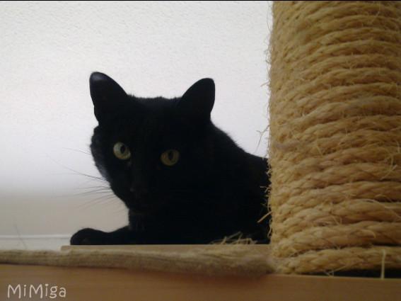 Gatos, rascadores + ciencia