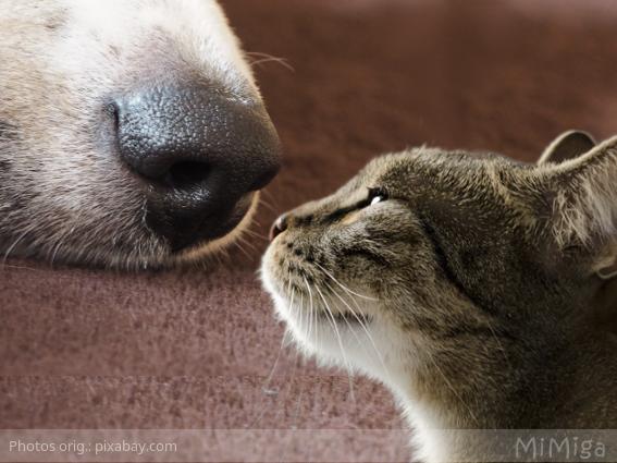 como ve tu perro o gato el mundo el olfato