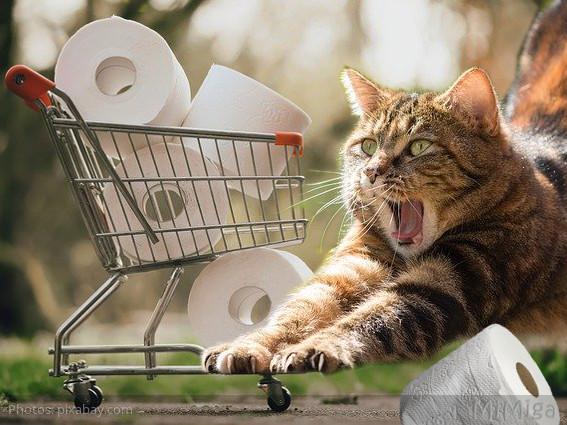 #COVID - El misterio del papel higiénico - #QuédateEnCasa - consejos para humanos & animales