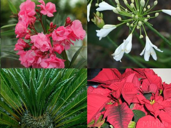 Cuidado: ¡Plantas tóxicas!