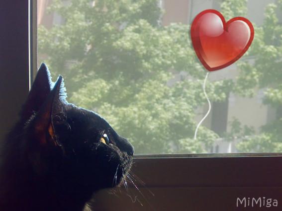 Los gatos y el amor