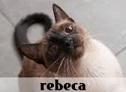 la-gatoteca-rebeca