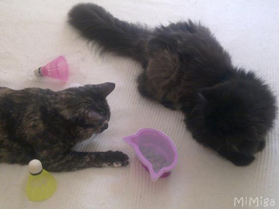 juego-casero-interactivo-casero-gatos