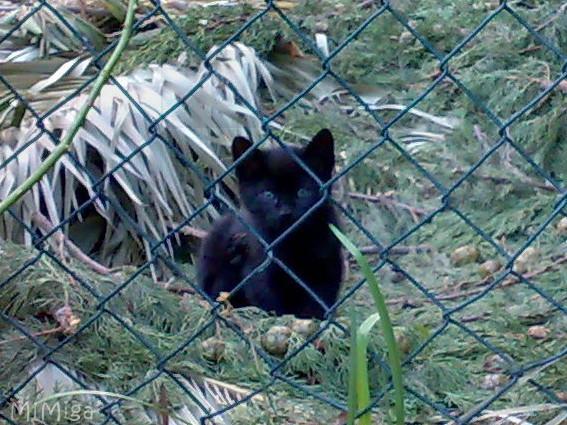 Protección Animal España (Marco legal)