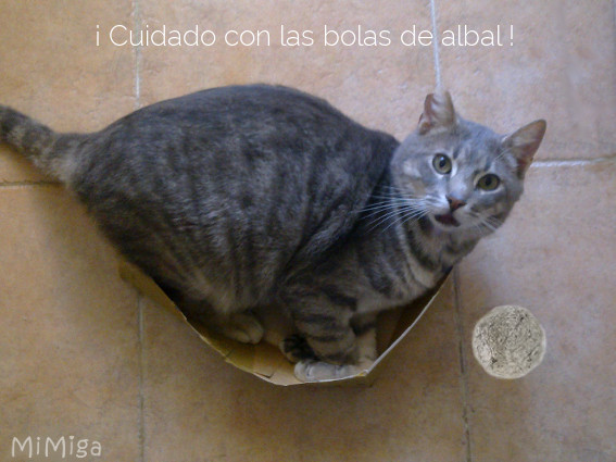 gato-caja-bola-papel-albal