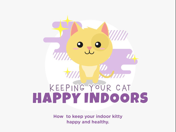 Keeping your indoor cat happy