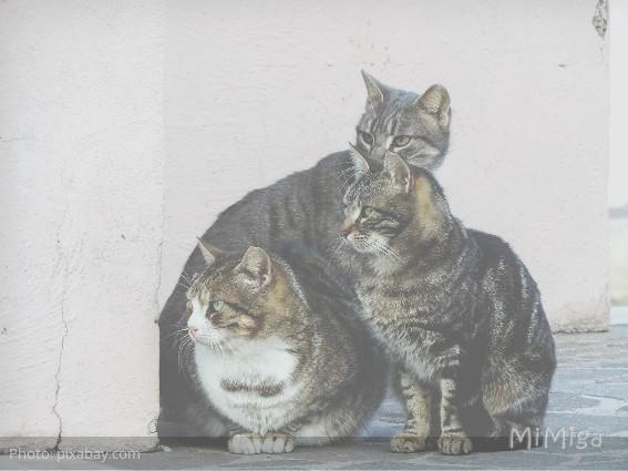 Proteger a los gatos de la calle