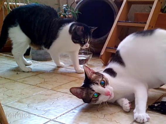 madreselva-tartarian-enriquecimiemto-ambiental-olfativo-felino-phibï-alex-roombito-mi-miga