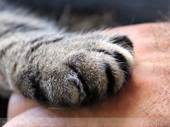 pata-gato-mano-humano