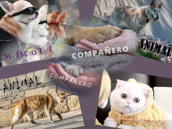 animales-mascotas-compeñeros