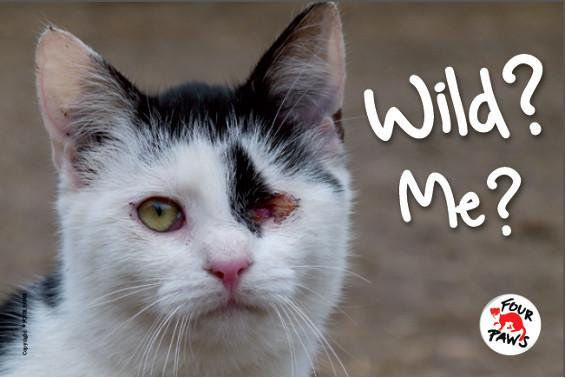 four-paws-campaign-wild-me-contra-consideracion-animales-abandonados-como-salvajes