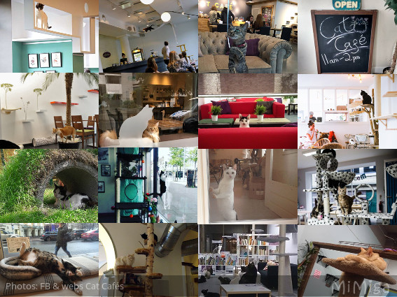Cat Cafes Europe  [Guide]