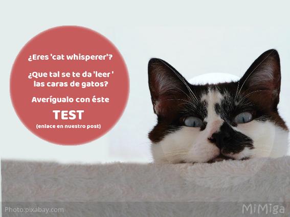 cara-gato-emociones-expresion-facial
