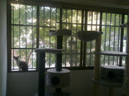 la-gatoteca-ventana-mirador-gatos