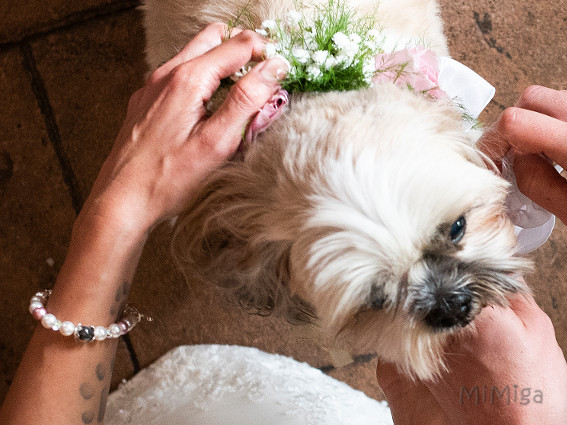 dog-lion-ring-bearer-artistic-bridal-jewellery-with-pet-hair-mi-miga-bracelet-wedding-swarovski-pearls-crystal-elements-sterling-cat-goku