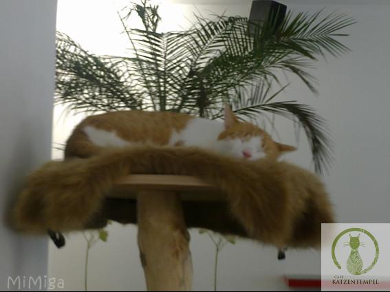 El Templo de los gatos