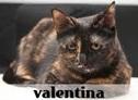 la-gatoteca-valentina