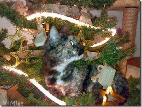 Cuidado Navidad: Peligros para tu gato