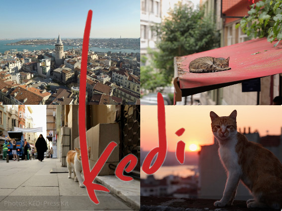 KEDi (CATS) - a cultural question