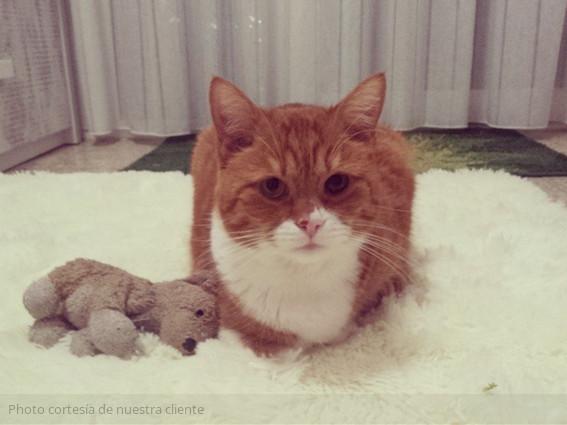 gato-rubi-con-su-muñeco