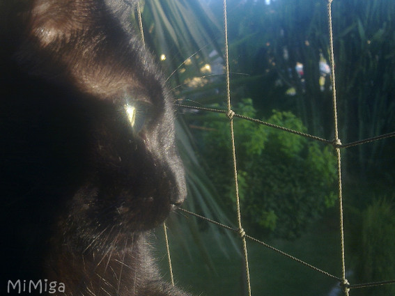 Cats love windows - protect them!
