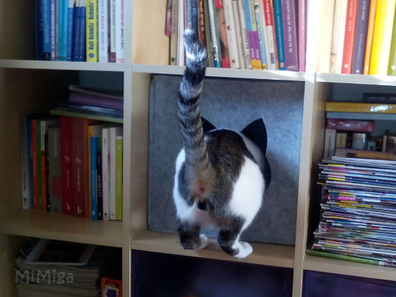 phibï-mi-miga-cueva-gatos-fieltro-zooplus-premio-gatrivial