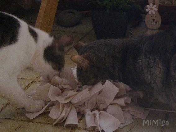 alfombra olfativa diy gatos