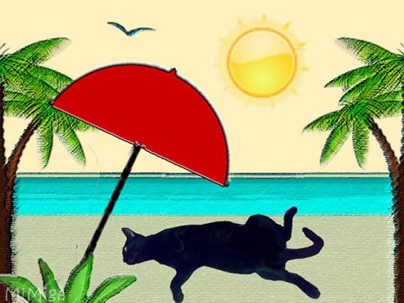gato vacaciones