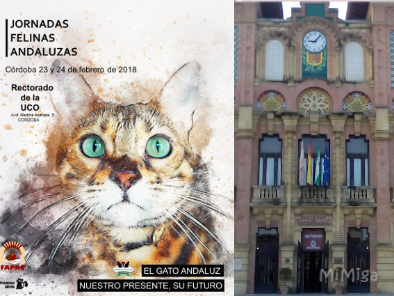 I Jornada Felina Andaluza, 2018