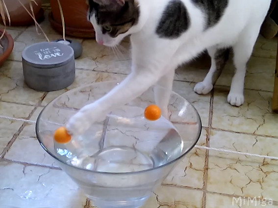 SUMMER fun for cats