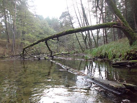 viel Holz im Wasser