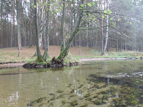 das Wasser der Korytnica ist sehr sauber