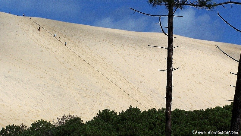 View of the dune's Eastern slope