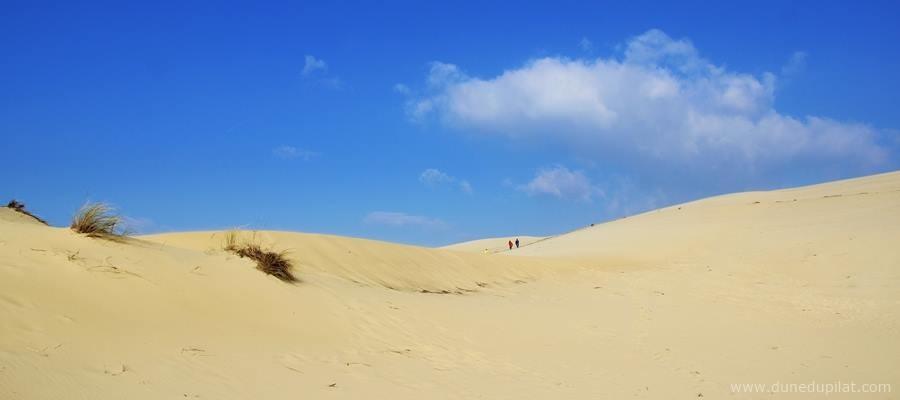 Une belle journée sur la dune