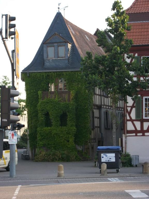 Im April 2010 erscheint uns das Gerberhaus wie ein hinter wildem Wein versteckter geheimnisvoller Ort.