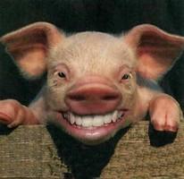 so sieht wohl ein Lachschwein aus...