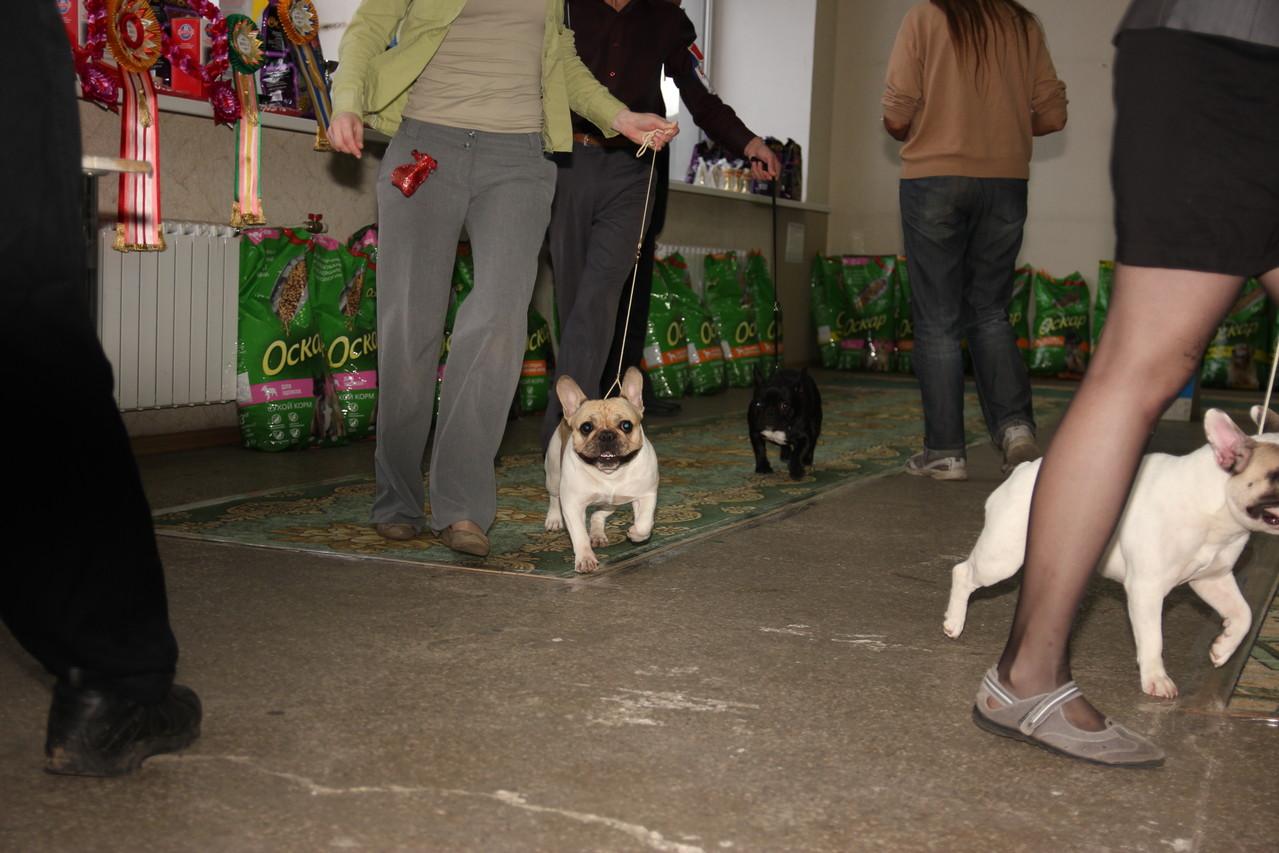 07.10.12. Британа Бетина. отл. -2 (из 5 собак в классе). Эксперт Шиян В.