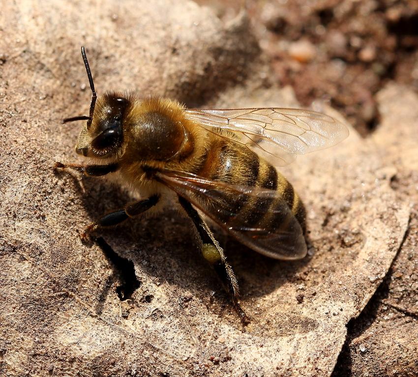 auch fleissige Insekten brauchen mal eine Pause