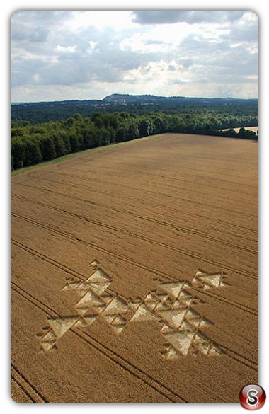 Crop circles - Savernake Forest, Wiltshire 2005
