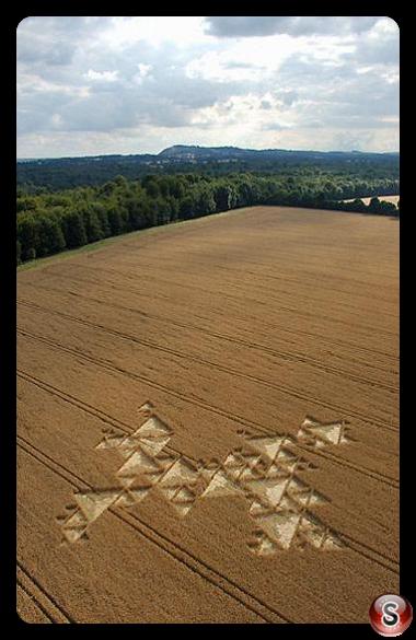 Crop circles - Savernake Forest Wiltshire 2005