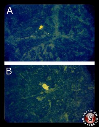 Due immagini A - B riprese con un'apparecchiatura ottico-microscopica realizzata per fotografare il campione