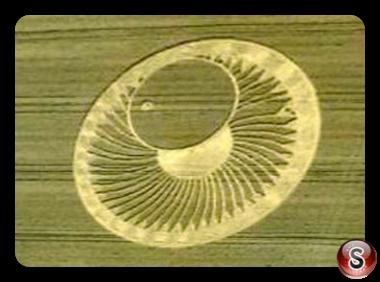 Crop circles Ravenna, Emilia Romagna Italy 2015