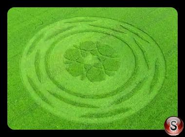 Crop circles Zollikofen - Bern 2017